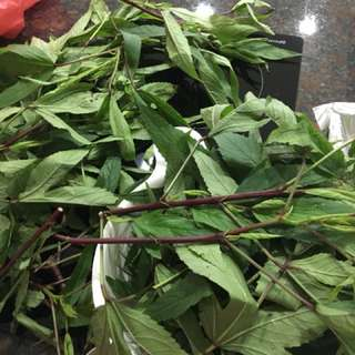 FREE roselle leaves and cuttings,
