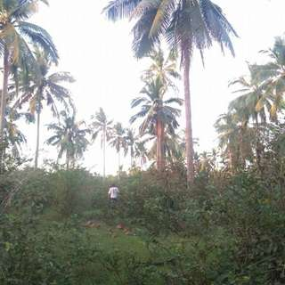 Farm lot for sale at rosario batangas