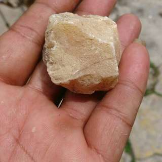 Rough fosil Mani Gajah