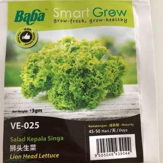 Lion Head Lettuce Seeds