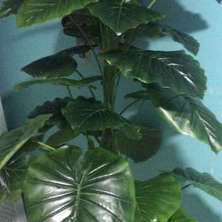 customers purchase artificial plants