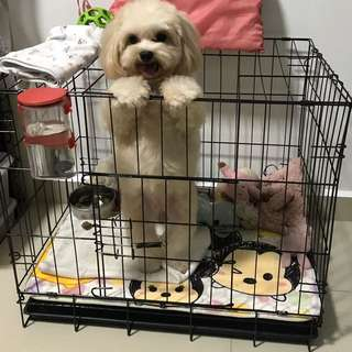 Crate / dog cage