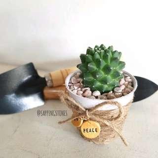 Cactus In Personalised Pot