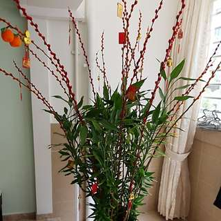 Lucky Bamboo  and 梅花decorated with cny accessories