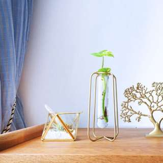 Water: Gold Geometric with Money Plant / Tabletop Palm