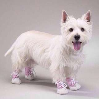 🍀BN East Side Collection GINGHAM Dog Shoes