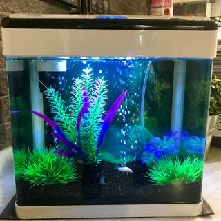 1 Feet good condition fish tank for sale