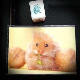 金毛鼠倉鼠重物明信片 Hamster Animal Post Card