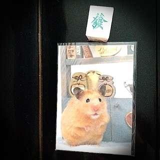 金毛鼠倉鼠動物明信片 Hamster Animal Post Card