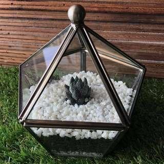 Minimalist Geometric Glass REAL Cactus