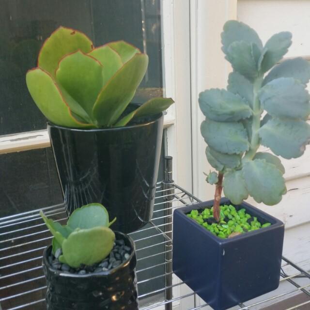 3 succulents x $30