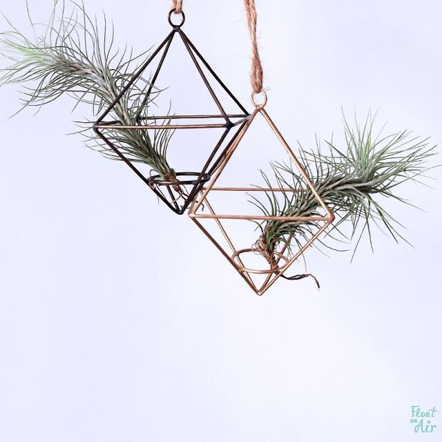 Hanging Ornaments: Diamond (M) with Air Plants in Gold & Black