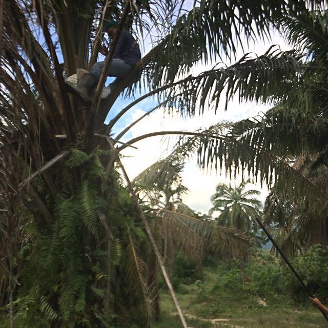 Looking For-Sprayer Oil Palm/Kelapa Sawit