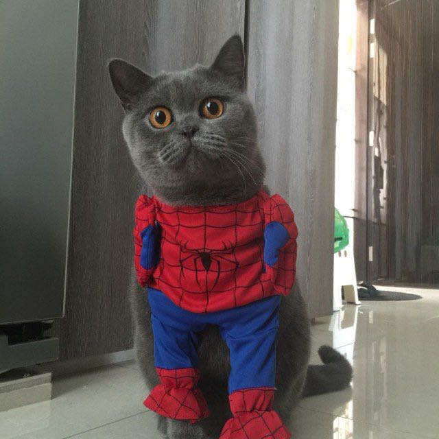 Spider-Man suit for cats