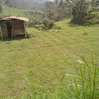 Jual cepat Tanah 500 tumbak 3 juta pertumbak