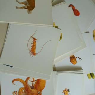 Flash cards for babies.. colour, animals and Vegetables and fruits. Size of glen doman cards