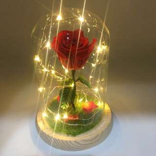 (SOLD OUT) Real preserved rose in dome shape glass ( with fairy lights)