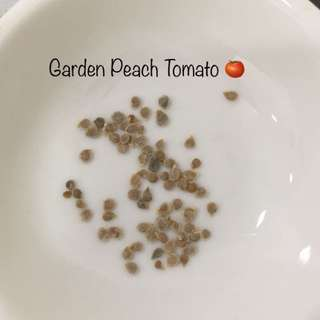 Garden Peach Tomato 🍅
