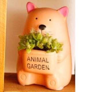 Mini Plant - Cat