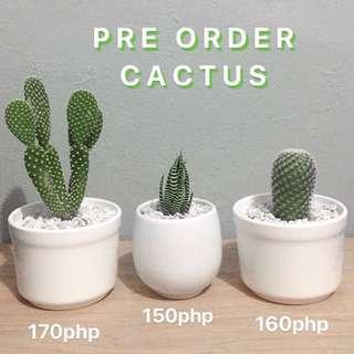Cactus plant/succulent