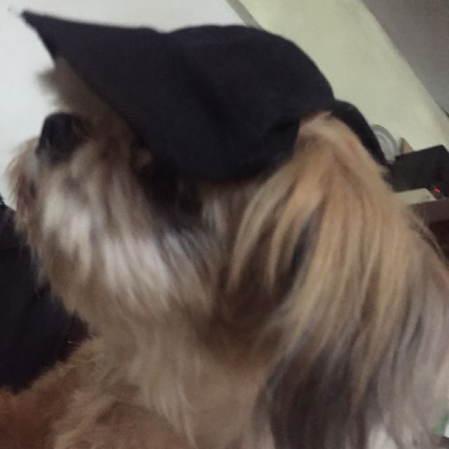 Made to Order Dog Hat
