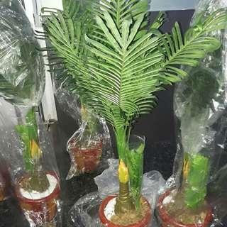 Artificial Plant | Rush Sale!