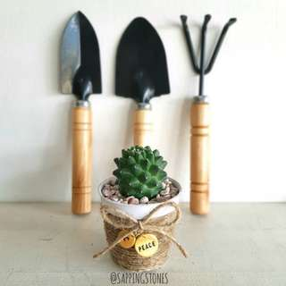 Cactus with customisable charm