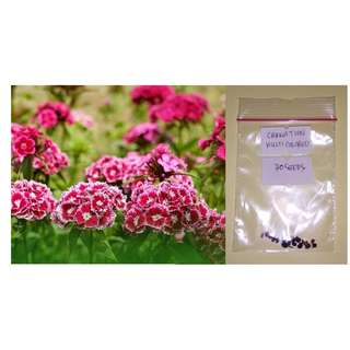 Multicolored Carnation Flower Seeds
