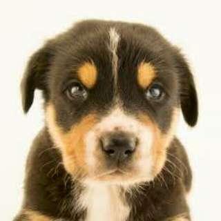 Dog walker/dog caretaker