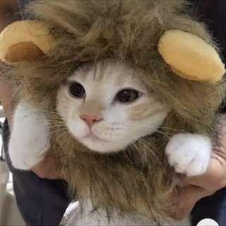 貓狗寵物 獅子頭搞笑裝飾