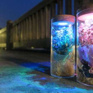 Valentine Flowers - Baby Breath in a bottle with color changing LED