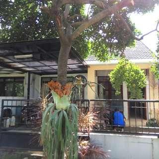Rumah 1 Lantai, Asri, Nyaman & Tenang, One Gate System (CCTV) di GRAHA CINERE