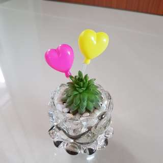 Succulent for Valentine's day gift!