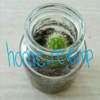 PREORDER♳Mini Baby Cactus Plant In Glass Bottle