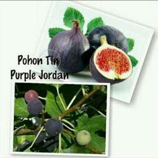 Tin purple yordan ungu