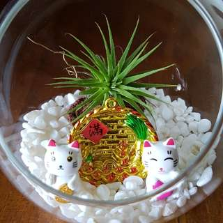 CNY Airplant Terrarium