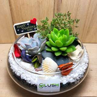 Perfect Gift for Valentine's Day/ V Day/ Valentine/ Christmas/ Xmas/ Birthday/ Congrats/ Farewell/ House warming/ Christmas/ Xmas - Real Plant Succulents/ Cactus Terrarium