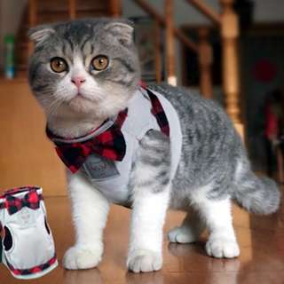 British Style Jacket Cat Harness with Leash (XXS 25-30cm)