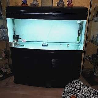 4ft fishtank set