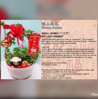 Fortune CNY Table Garden Pot Gift