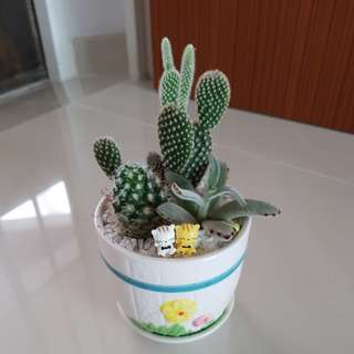 Cactus for Valentine's day gift!