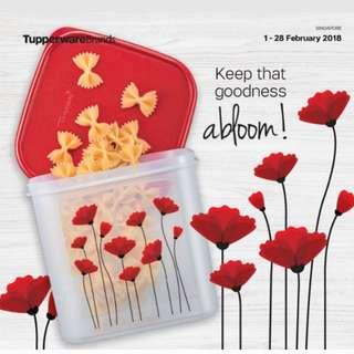 FEB 18 TUPPERWARE CATALOGUE