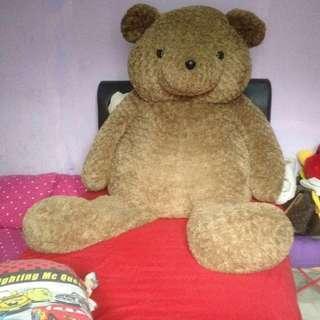 Teddy bear ori from teddy house