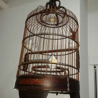 Mata Puteh Cage