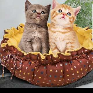 Brand New Cushion Cat Bed On Sale Buy 2 get Free Food Bowl / Pet Accesories  / Pet Toys