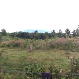 Farm lot for sale