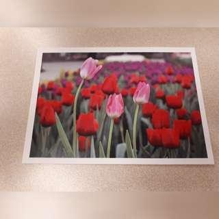 Travel Gift Postcard