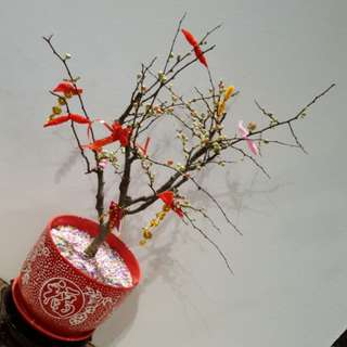 Red Chinese Flowering Apple海棠花