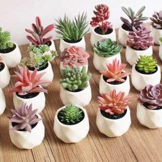 Wedding Door Gifts - Eternal Potted Succulents