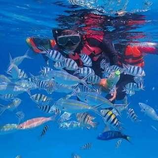 Pakej Bajet Pulau Redang: Daytrip